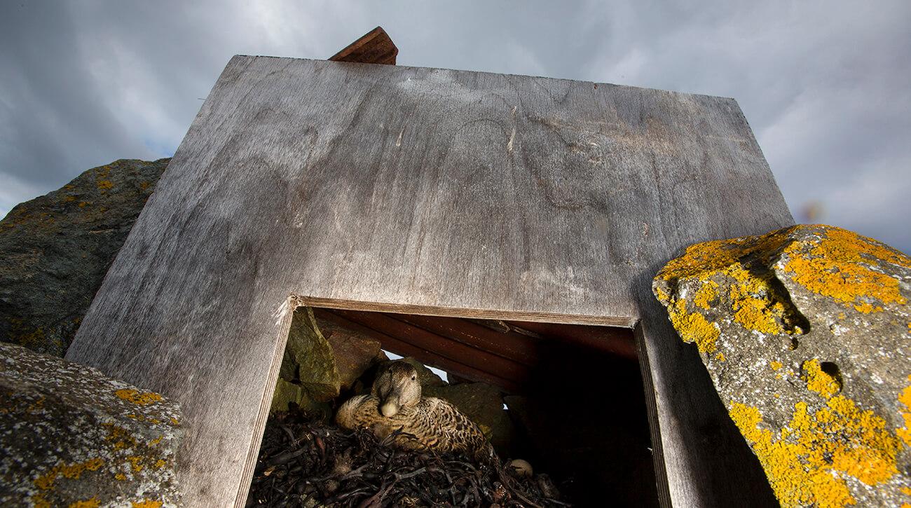 Ei E har funnet sitt steinhus. Foto: Cyril Ruoso