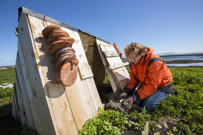 Erna finner edderdun i en av sine e-baner. Hun sjekker de hver eneste dag. Foto: Cyril Ruoso