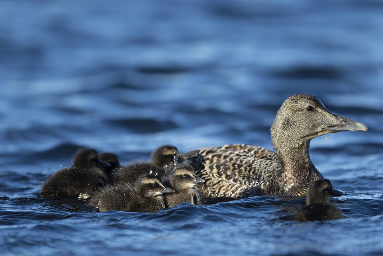 Mor og barn på svømmetur