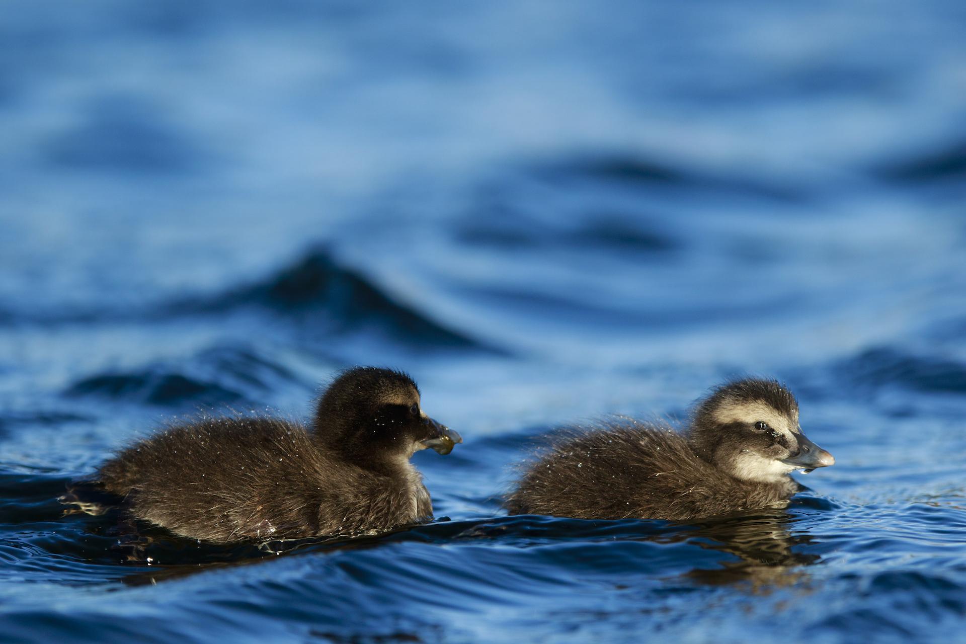 Eunger på svømmetur